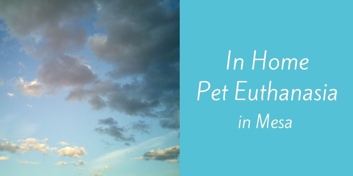 In-Home-Pet-Euthanasia-in-Mesa