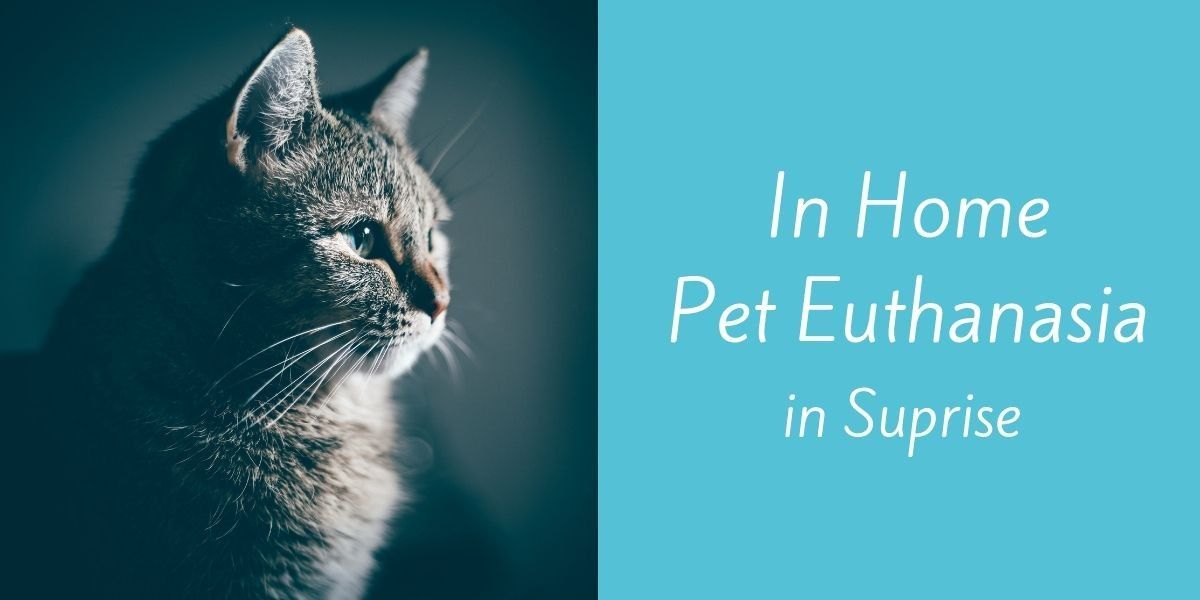 In-Home-Pet-Euthanasia-in-Suprise