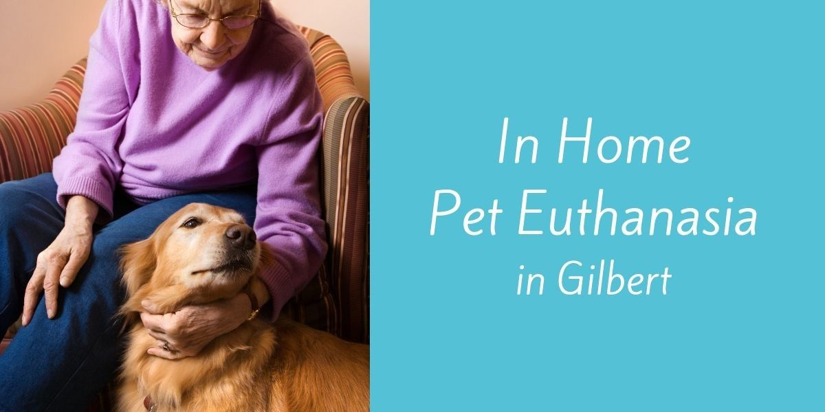 In-Home-Pet-Euthanasia-in-Gilbert