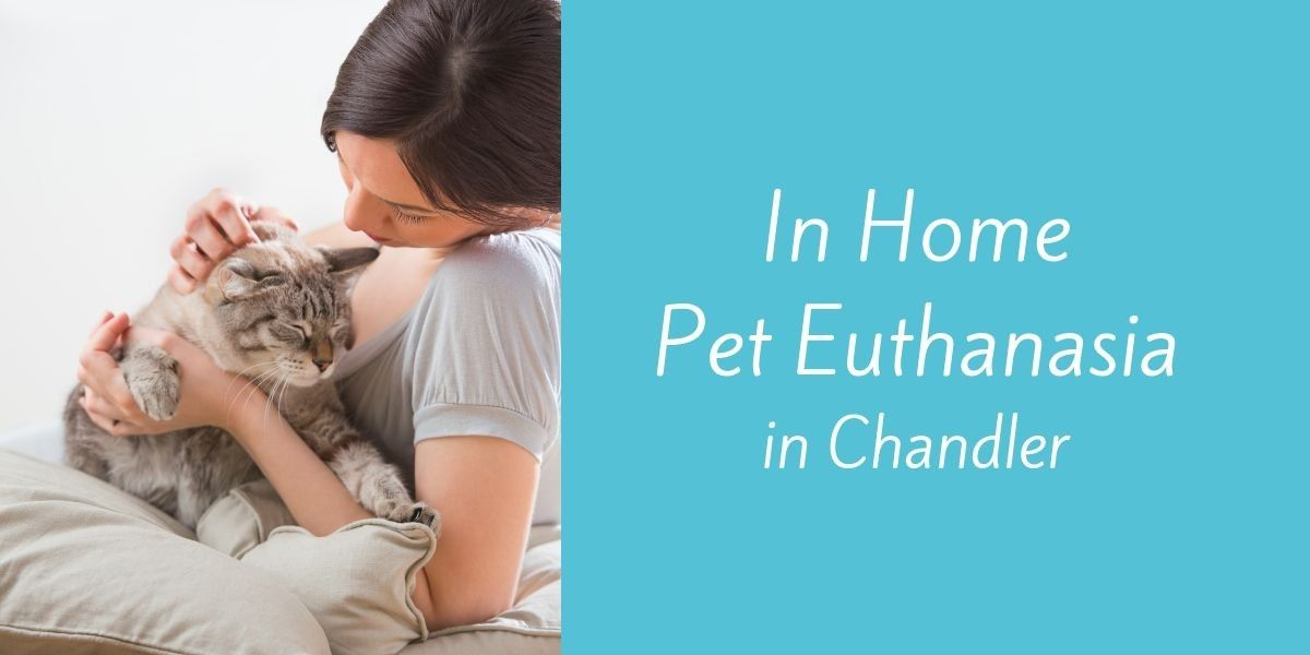 In-Home-Pet-Euthanasia-in-Chandler