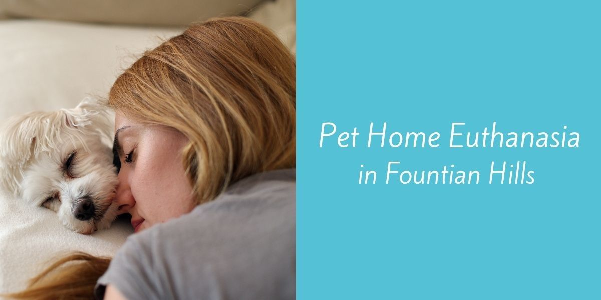 Pet-Home-Euthanasia-in-Fountain-Hills