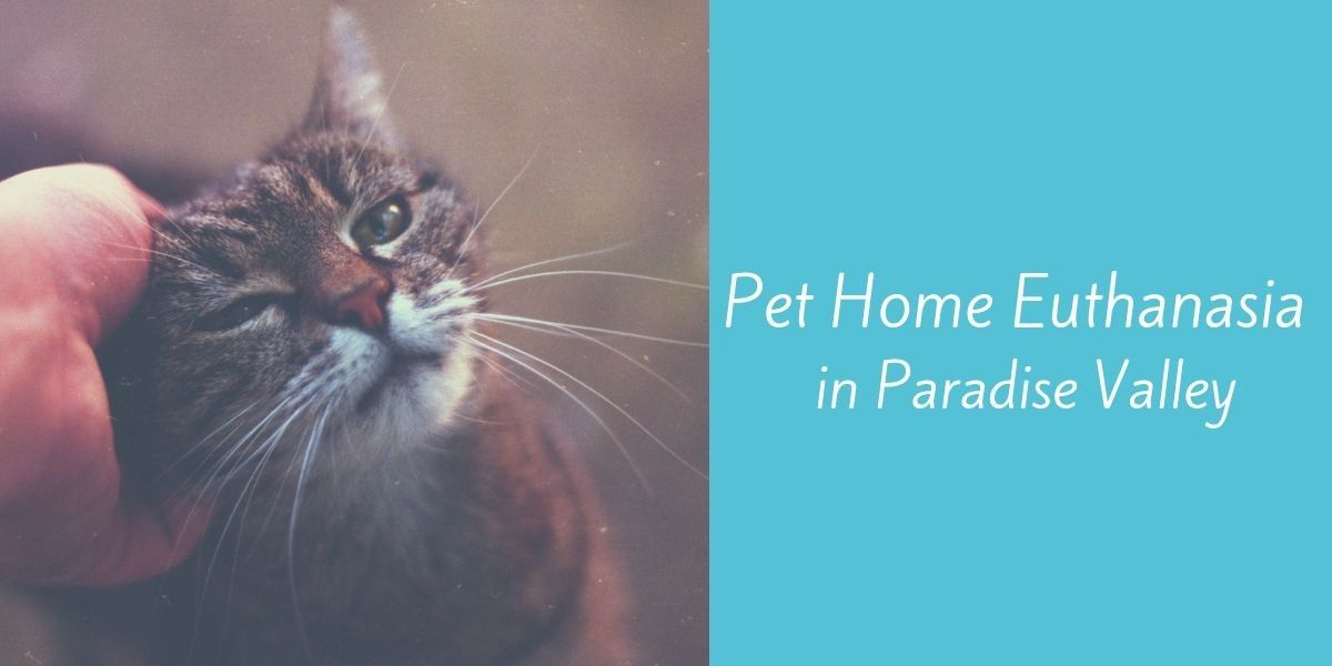 Pet-Home-Euthanasia-in-Paradise-Valley-1