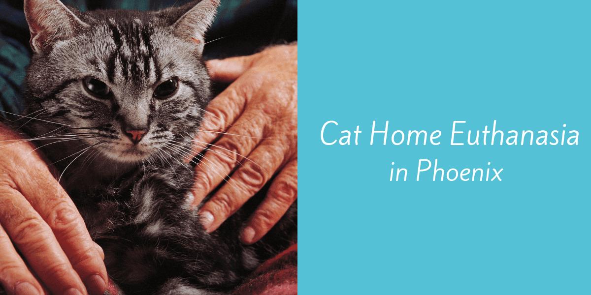 Cat Home Euthanasia In Phoenix Blog