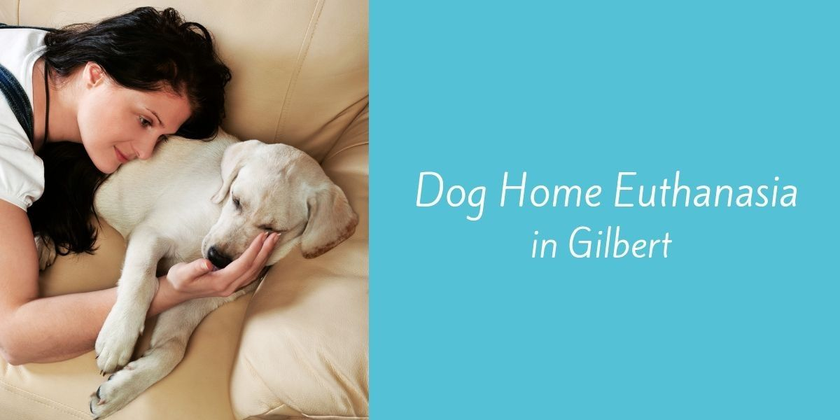 Dog-Home-Euthanasia-in-Gilbert