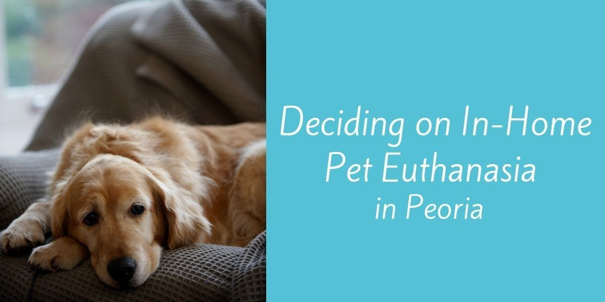 Deciding-on-In-Home-Pet-Euthanasia-in-Peoria