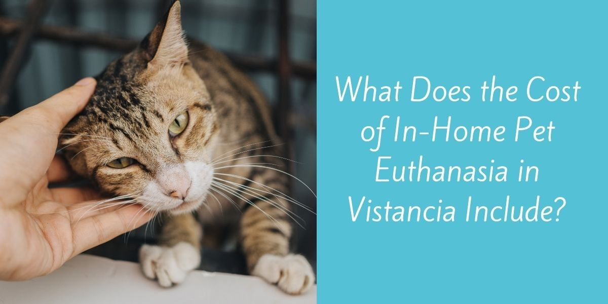 What-Does-the-Cost-of-In-Home-Pet-Euthanasia-in-Vistancia-Include_