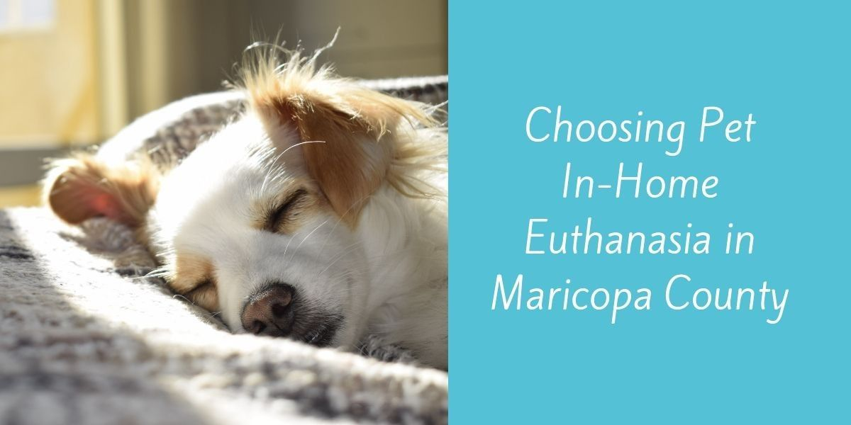 Choosing-Pet-In-Home-Euthanasia-in-Maricopa-County