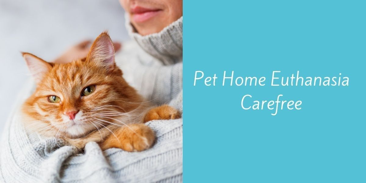 Pet_Home_Euthanasia_Carefree
