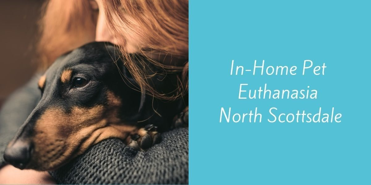 In-Home_Pet_Euthanasia_North_Scottsdale