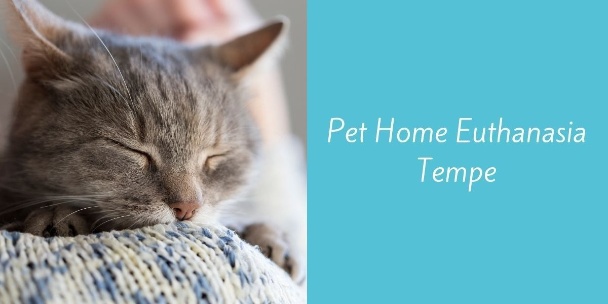 Pet_Home_Euthanasia_Tempe_1