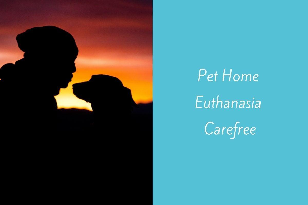 Pet-Home-Euthanasia-Carefree