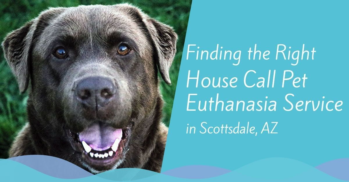 house-call-pet-euthanasia-scottsdale-az