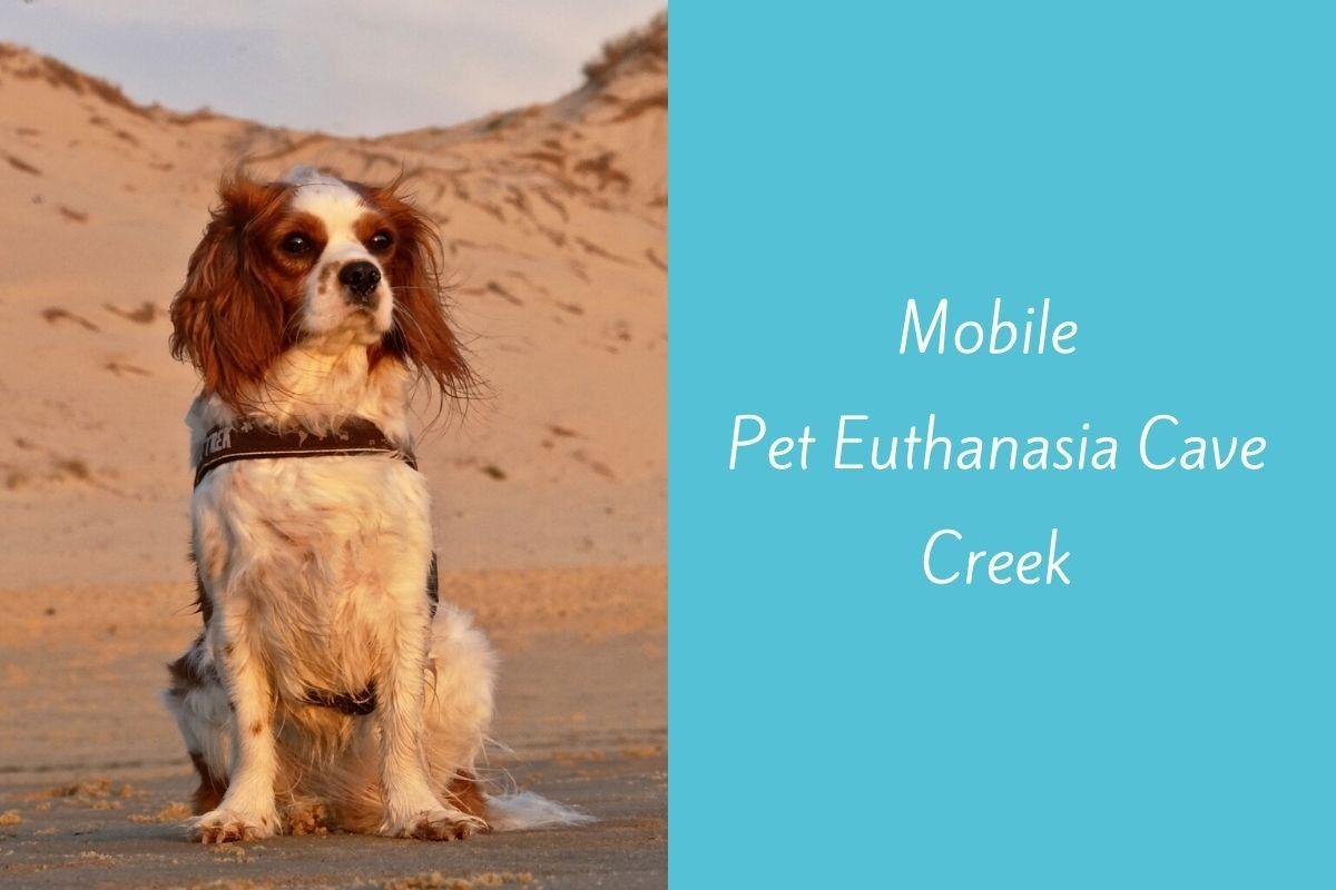 Mobile-Pet-Euthanasia-Carefree-1