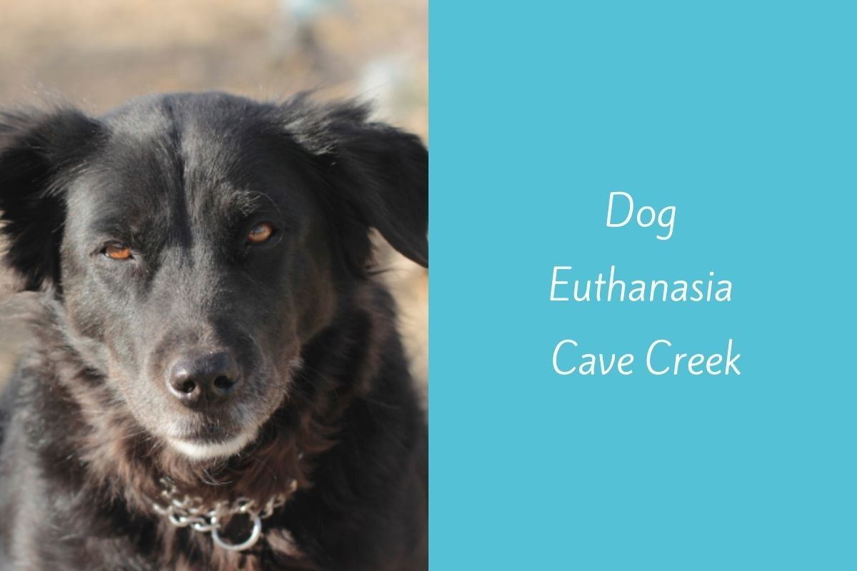 Dog-Euthanasia-Cave-Creek