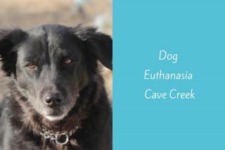 Dog-Euthanasia-Cave-Creek