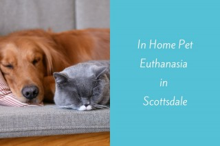 In-Home-Pet-Euthanasia-in-Scottsdale