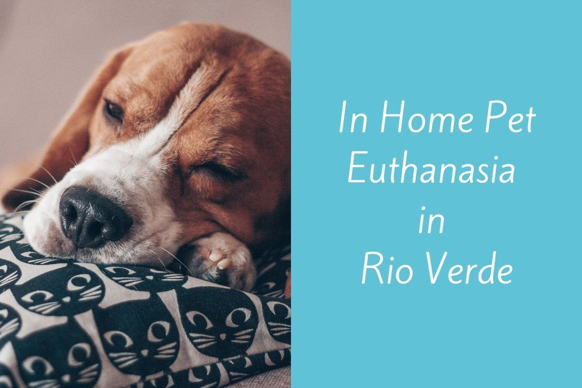In-Home-Pet-Euthanasia-in-Rio-Verde