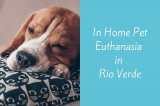In-Home-Pet-Euthanasia-in-Rio-Verde