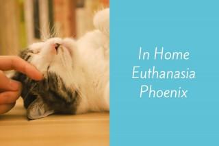 In-Home-Euthanasia-Phoenix