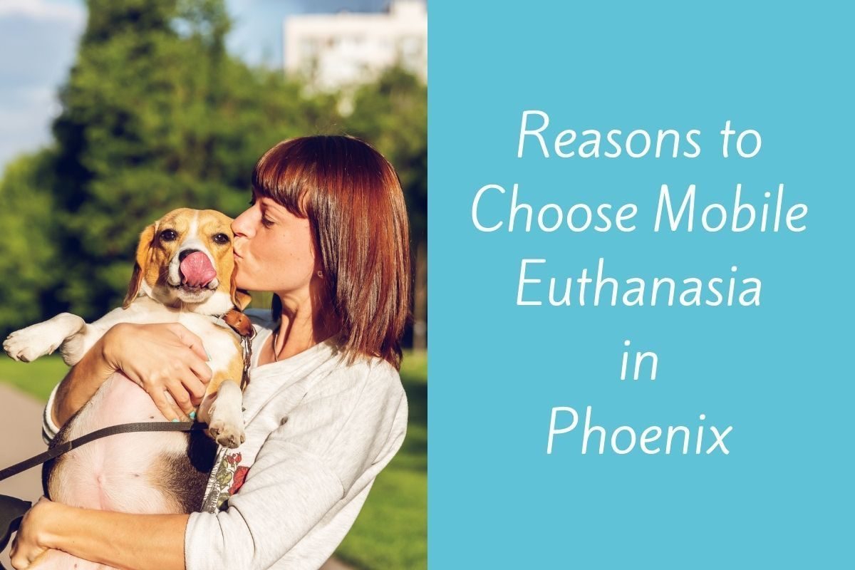 Reasons-to-Choose-Mobile-Euthanasia-in-Phoenix