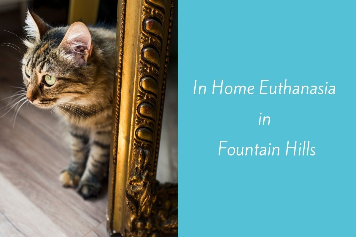 In-Home-Euthanasia-in-Fountain-Hills