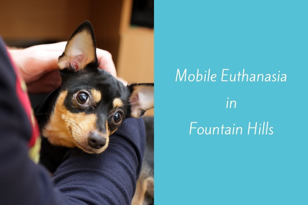Mobile-Euthanasia-in-Fountain-Hills