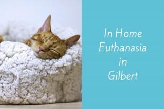 In-Home-Euthanasia-in-Gilbert