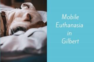 Mobile-Euthanasia-in-Gilbert
