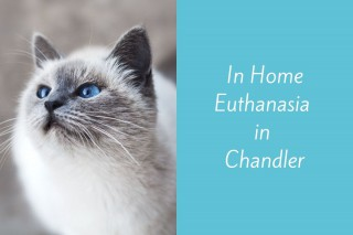 In-Home-Euthanasia-in-Chandler