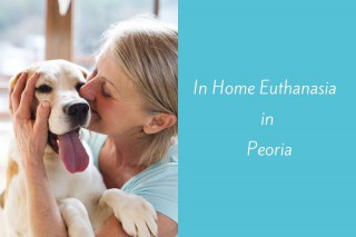 In-Home-Euthanasia-in-Peoria