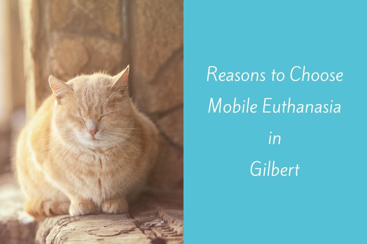 Reasons-to-Choose-Mobile-Euthanasia-in-Gilbert