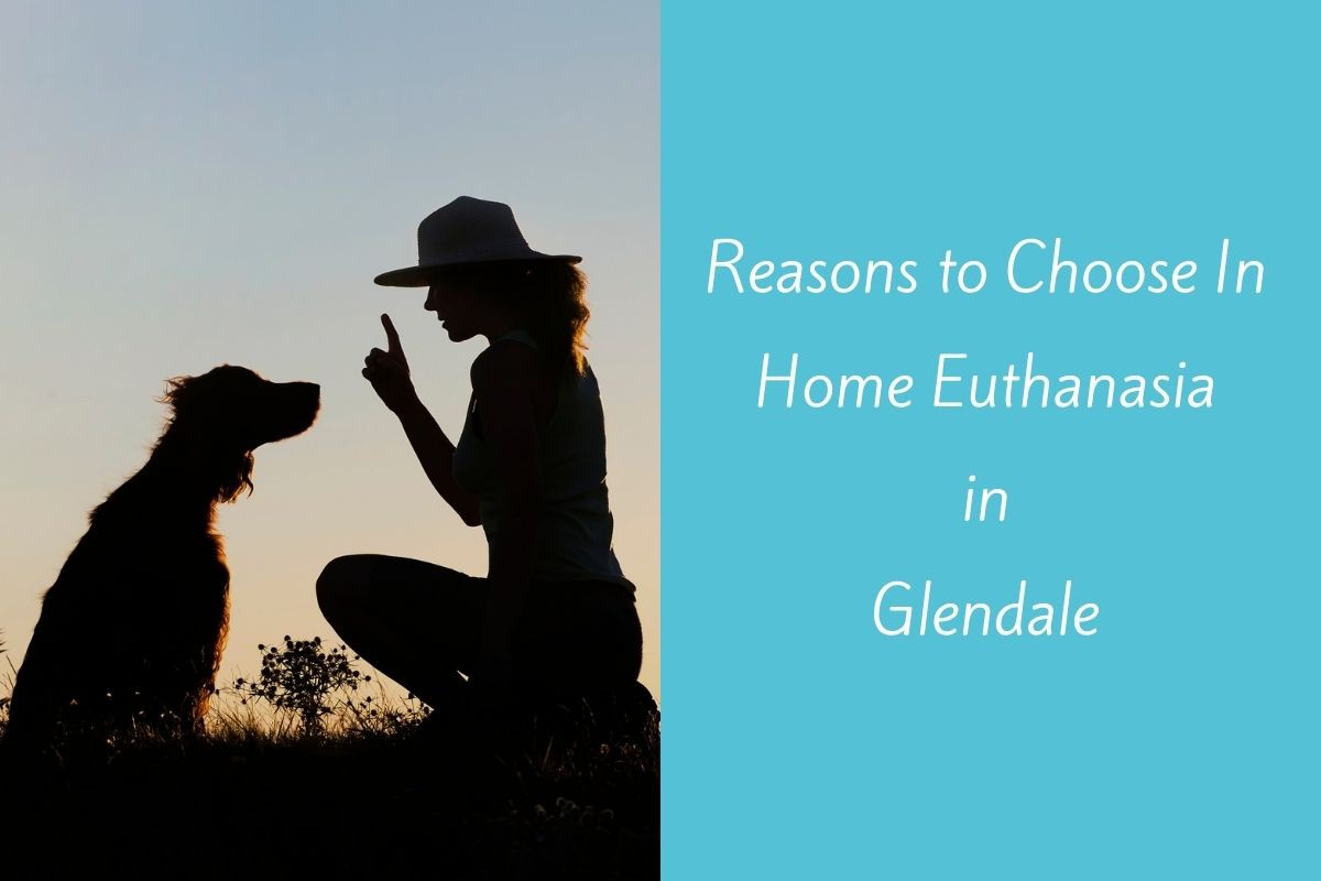 Reasons-to-Choose-In-Home-Euthanasia-in-Glendale