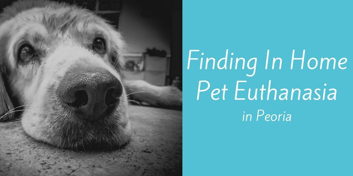 Finding-In-Home-Pet-Euthanasia