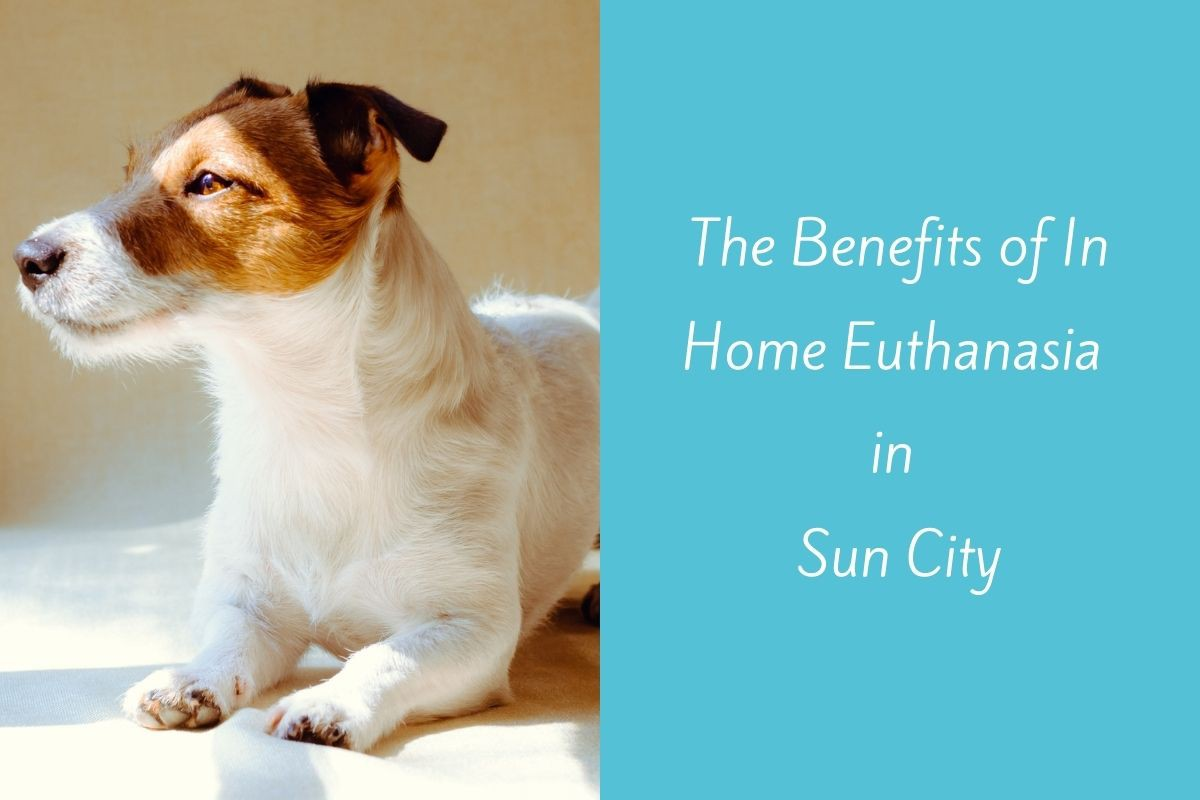 The-Benefits-of-In-Home-Euthanasia-in-Sun-City