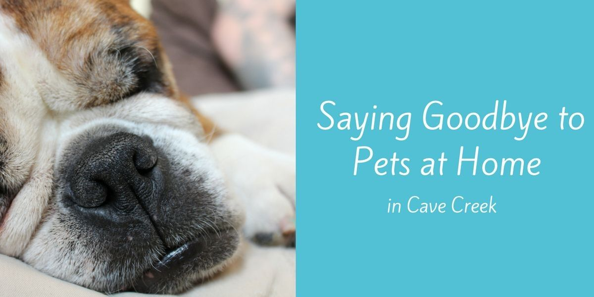 Saying-Goodbye-to-Pets-at-Home-in-Cave-Creek