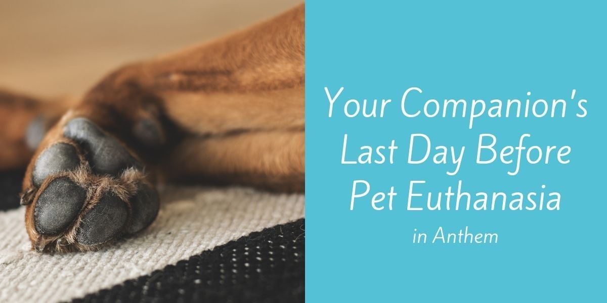 Your-Companions-Last-Day-Before-Pet-Euthanasia-in-Anthem