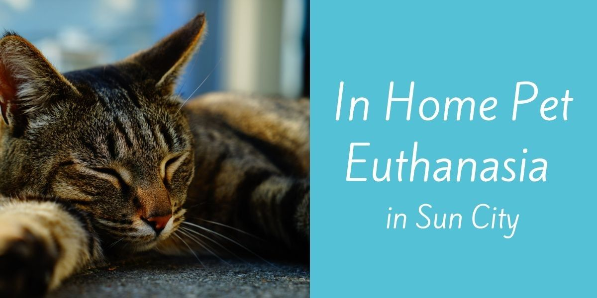 In-Home-Pet-Euthanasia-in-Sun-City