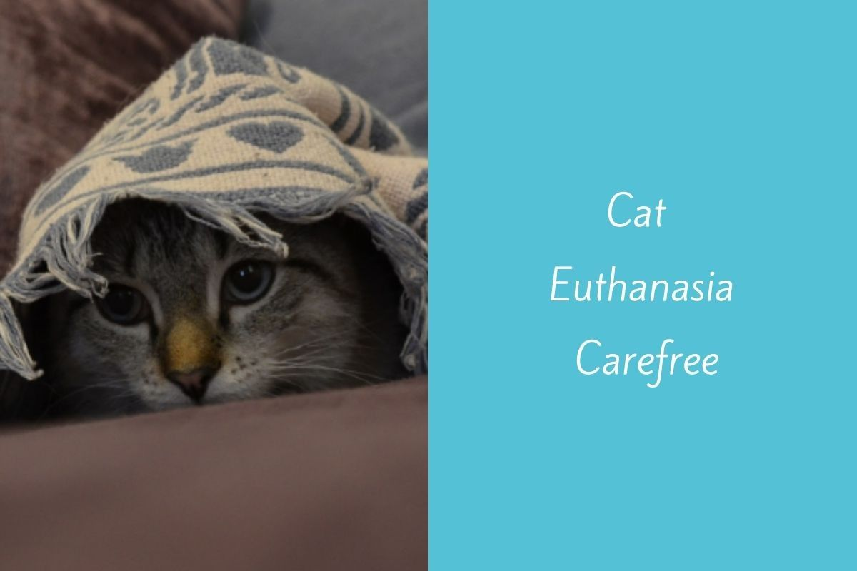Cat-Euthanasia-Carefree