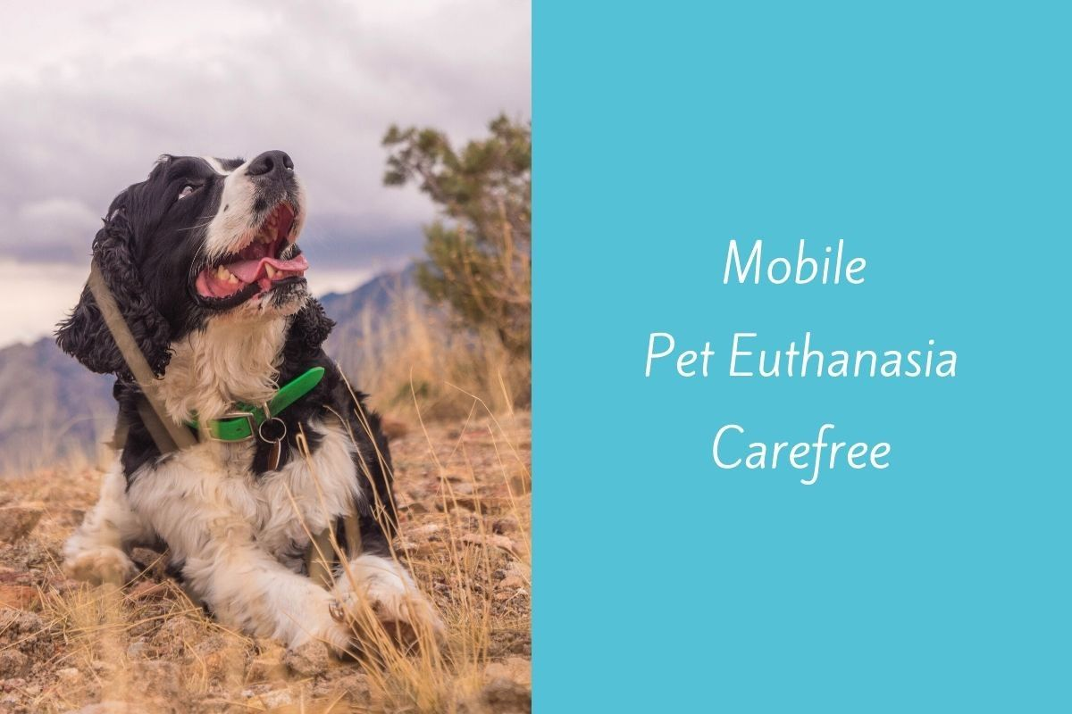 Mobile-Pet-Euthanasia-Carefree