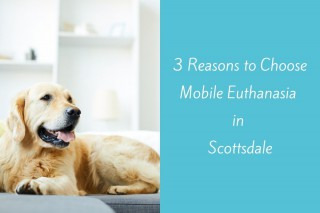 3-Reasons-to-Choose-Mobile-Euthanasia-in-Scottsdale--1