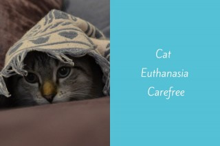 Cat-Euthanasia-Carefree
