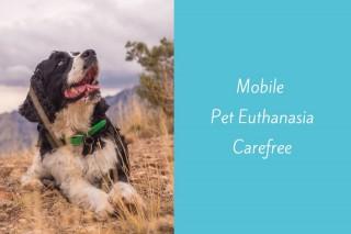 Mobile-Pet-Euthanasia-Carefree